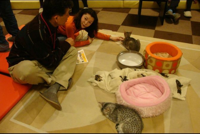 Tokyo Cat Cafes | Calico | GlobalPost