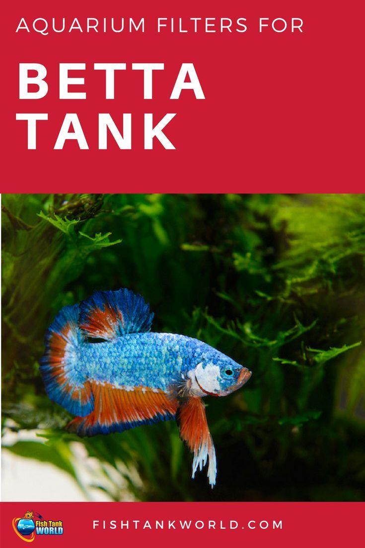 142 best Betta Fish images on Pinterest | Betta fish care, Betta ...