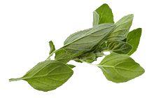 Der Geruch von Majoran ist sehr aromatisch, sein Geschmack würzig mit einer leicht bitteren Note. Majoran sollte daher vorsichtig dosiert werden. Majoran harmo-niert sehr gut mit Chili, Pfeffer, Knoblauch, Kümmel, Paprika, Lorbeer und Wacholderbeeren.