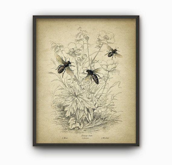 Vintage Honey Bee Art Print - Queen Bee - Worker - Drone Bee - Beehive…