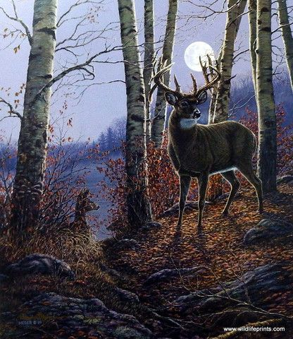 A doe and a buck stand alert in the woods on a cool autumn night as the full moon rises above them. This is an artist proof print with a certificate of authenticity.
