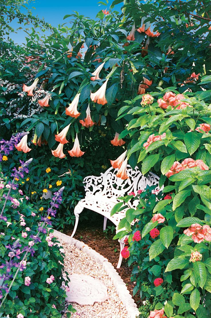 How to create a tropical garden - A Palm Beach County Flower Garden Pamela Combines Tropical Flowering Shrubs To Create This Fairy