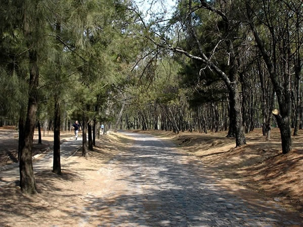 Bosque Colomos #Gdl #endondecorrer #correr #running
