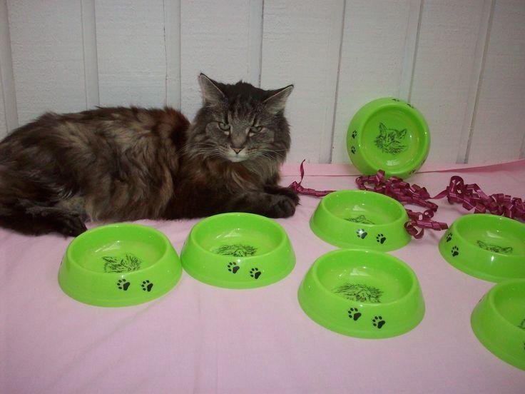 Vackra limefärgade matskålar med Simba själv som motiv. 39 kr/st på www.katt4you.se