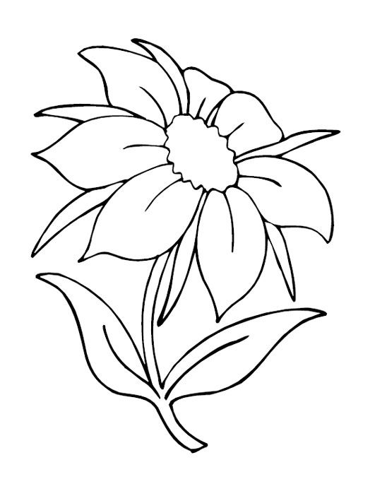 266 Best Flower Pic Images On Pinterest Coloring Pages Adult Free Flower Coloring Pictures For Kindergarten