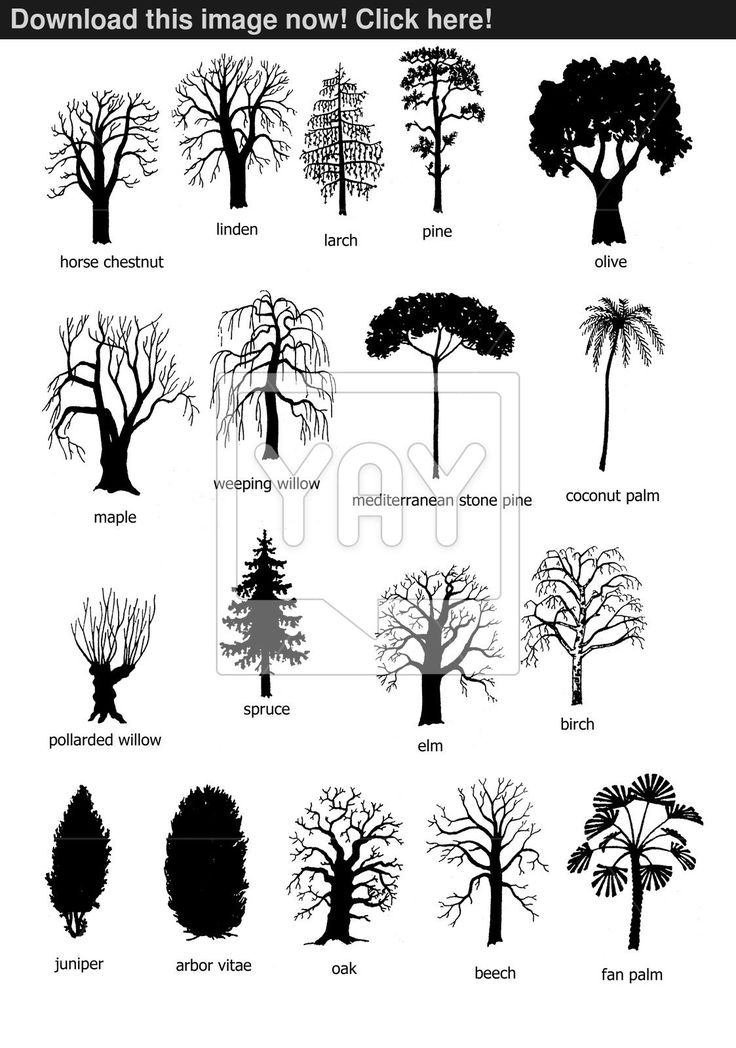 18 types of trees image