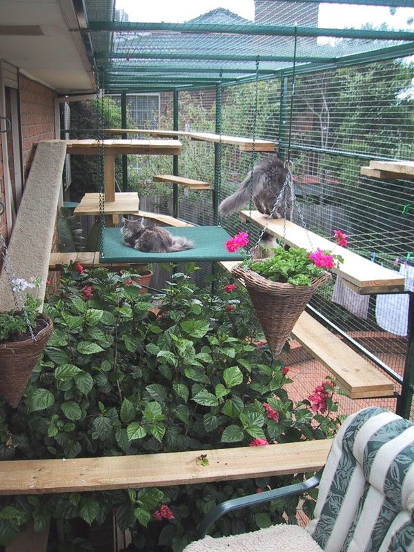 Cat Enclosures - Commercial Cat Enclosures & Cat Runs | Interesting Stuff
