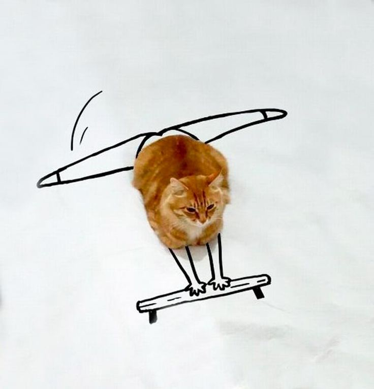 Voici le Doodle Cat, ou quand Internet s'amuse à détourner une simple photo de chat en imaginant des situations amusantes avec quelques traits de crayon ! Vo