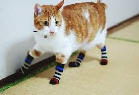 animals and socks
