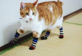 animals and socks