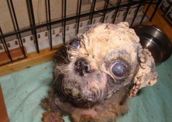 蓄犬業者(ブリーダー)の実態   - NPO個人ケイ&リルこの世界のために 全日本動物愛護連合 アニマルポリス 動物愛護党