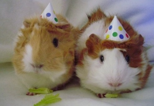 Partying Hamsters @ 5er