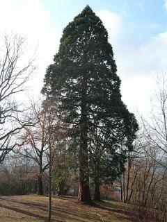 Sequoia Panzió