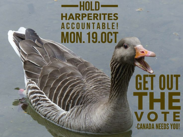 Hold Harperites Accountable! | Get Out the Vote Mon. Oct. 19, 2015