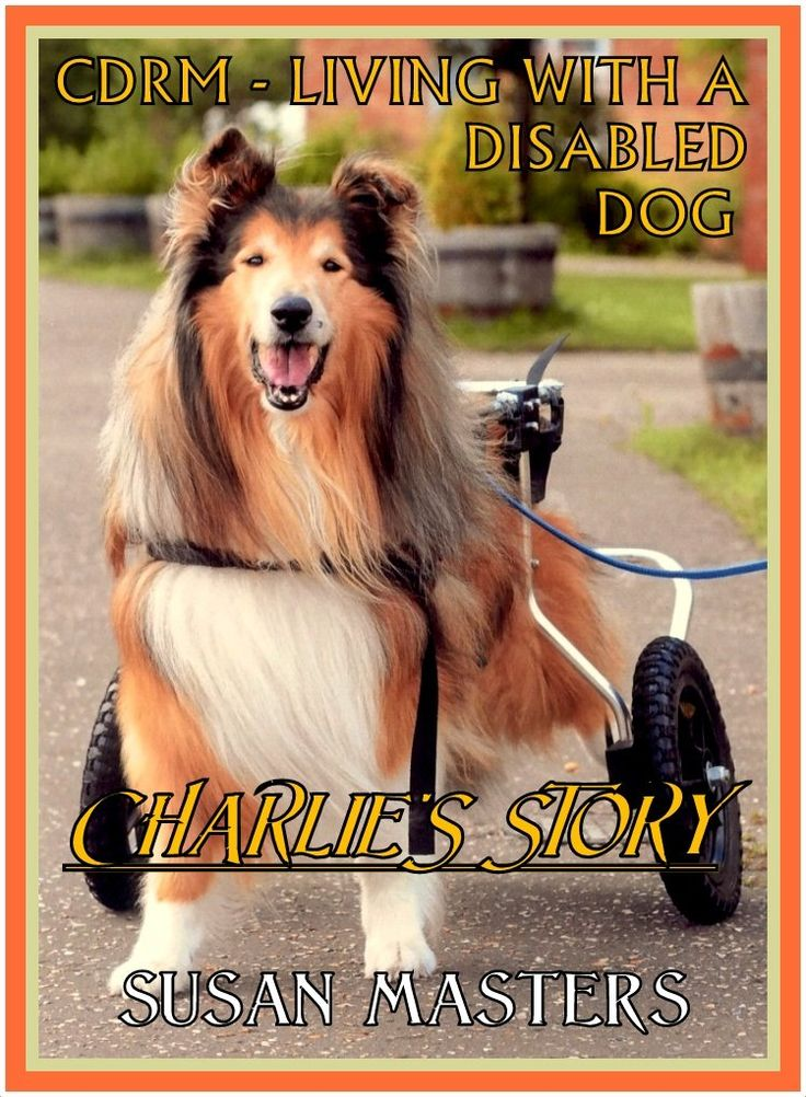 251 best all things collie images on pinterest collie dog and cdrm living with a disabled dog charlies story by susan masters http fandeluxe Ebook collections
