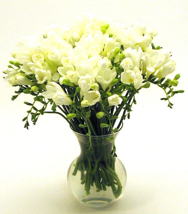 Google Image Result for http://www.floweringflowers.net/wp-content/uploads/2010/02/White-Freesia.JPG