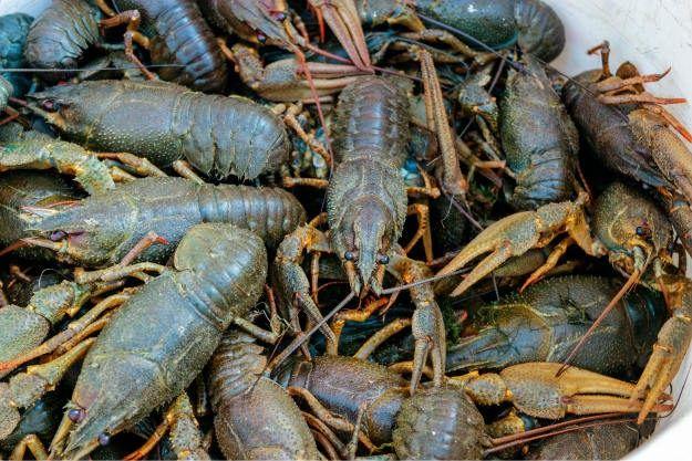 crayfish Non-Traditional Farm Animals | 10 Uncommon Animals Found on The Farm