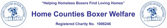 Home Counties Boxer Welfare.  We consist of a small number of people who voluntarily give their time to rehoming those boxers who, through no fault of their own, have to find a new family.  We also try to help with general advice on the Boxer breed and any problems which may arise.