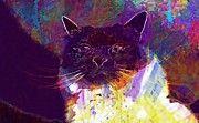 "New artwork for sale! - "" Sacred Birman Cat Adidas Breed Cat  by PixBreak Art "" - http://ift.tt/2uCDnH1"