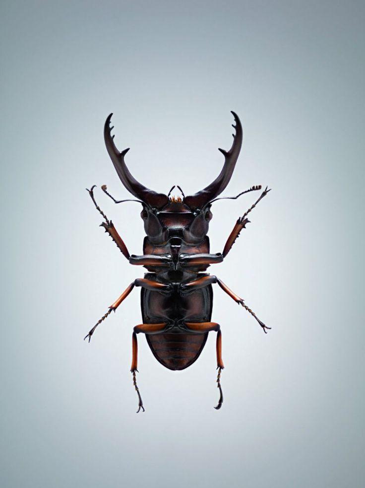 Entomophagy By Jonathan Gregson