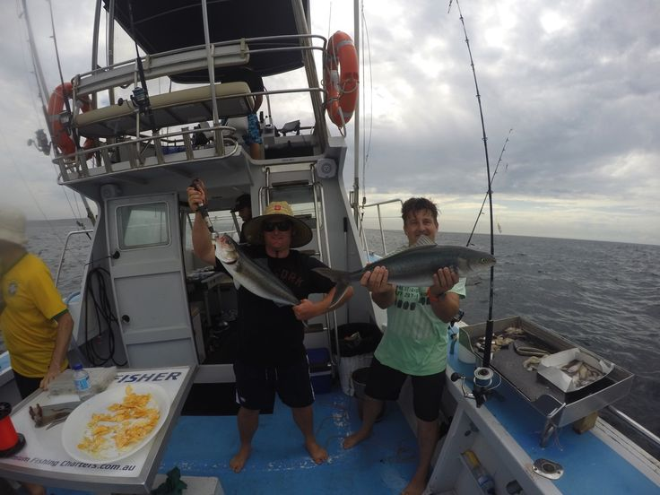 Big FAT Aussie Salmon.... - http://sydneypremiumfishingcharters.com.au/big-fat-aussie-salmon/