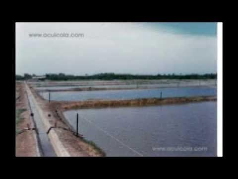 Acciones previas al cultivo de camarón en agua dulce. 2/3