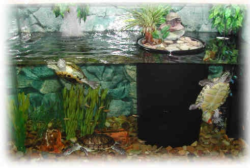 aquarium decor idea