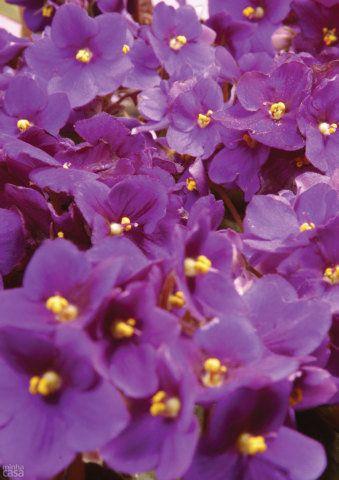5 espécies de plantas para cultivar no banheiro. Fotos publicadas na revista MINHA CASA.