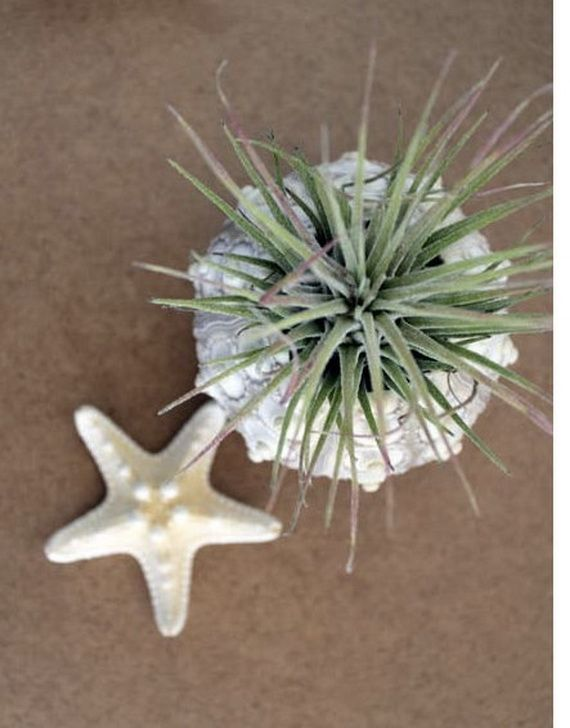 Unusual Air Plants - Home Decoration Inspiration Ideas and Gifts_39