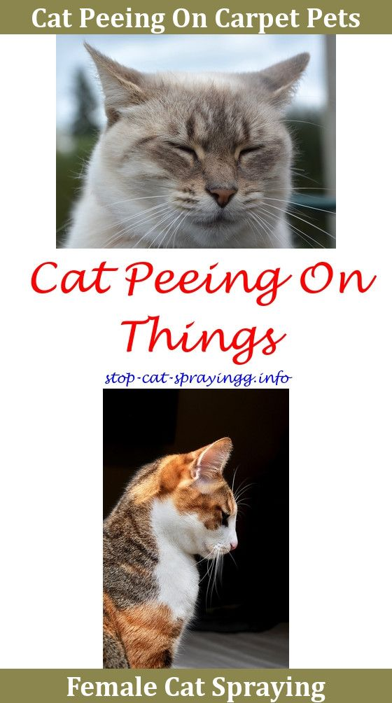 Cat Spray How To Make Urine Remover Animals Out Of Clothes