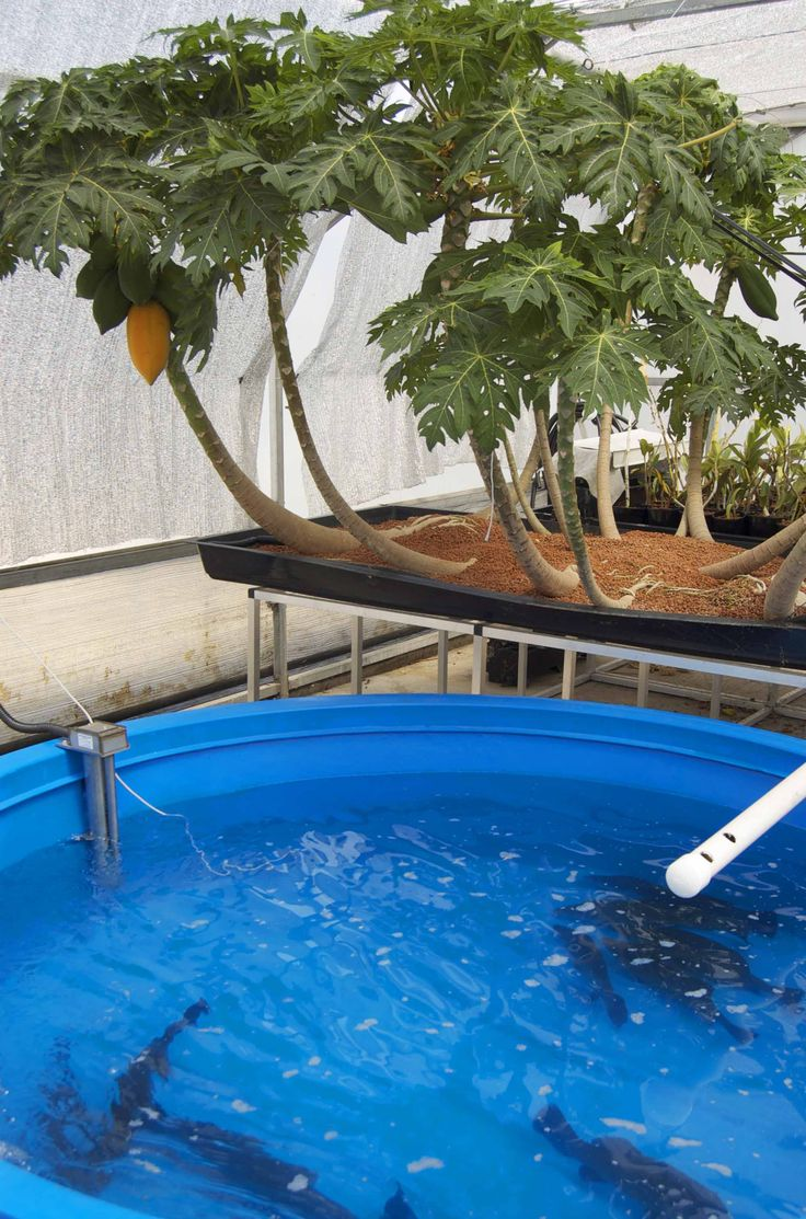 Aquaponics Designs That Are Currently Being Used To Grow Healthy ...