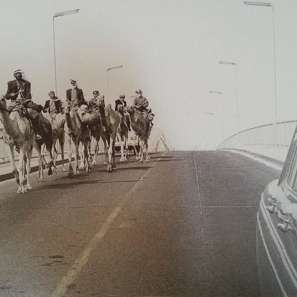 Some camels on Al Maktoum Bridge in Dubai 1972 | UAE ...