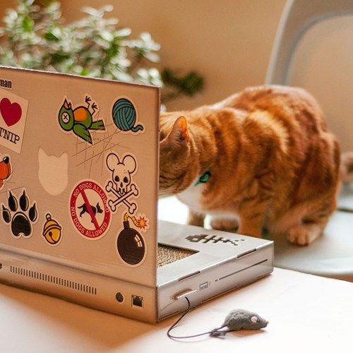 Katzen Laptop: Kratzbaum Cattop
