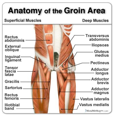 Anatomy of the Groin Area - home to some of the more stubborn soft ...