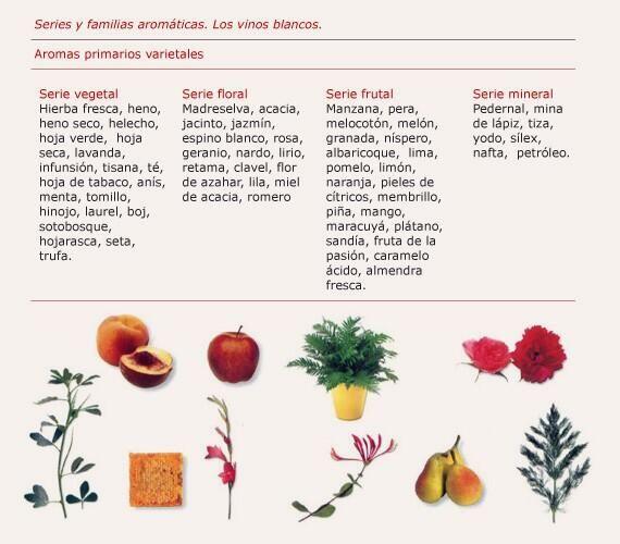 Aromas primarios o varietales