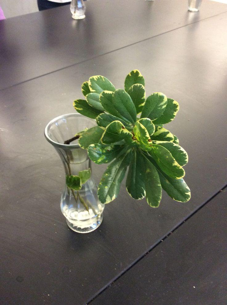3e4b644003b087dac33daee0dd875324--vase-arrangements-cut-flowers Layout Design For Small Flower Cutting Garden on ideas for small flower gardens, designs for small flower gardens, plans for small flower gardens,