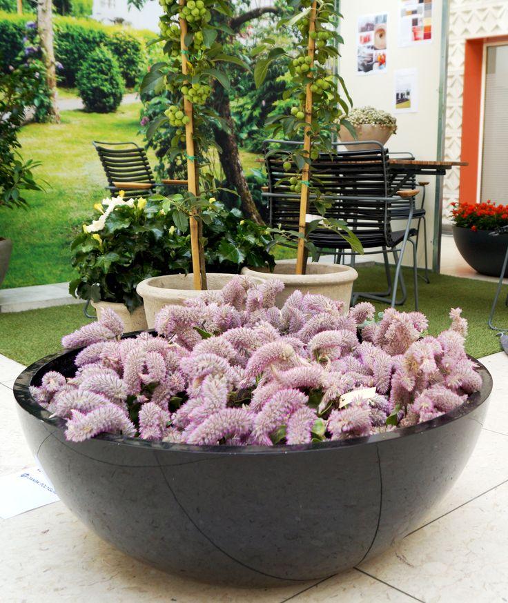 #trend #urban #Denmark #floradania #blomsterfestival #odense  NorthØ composite planters