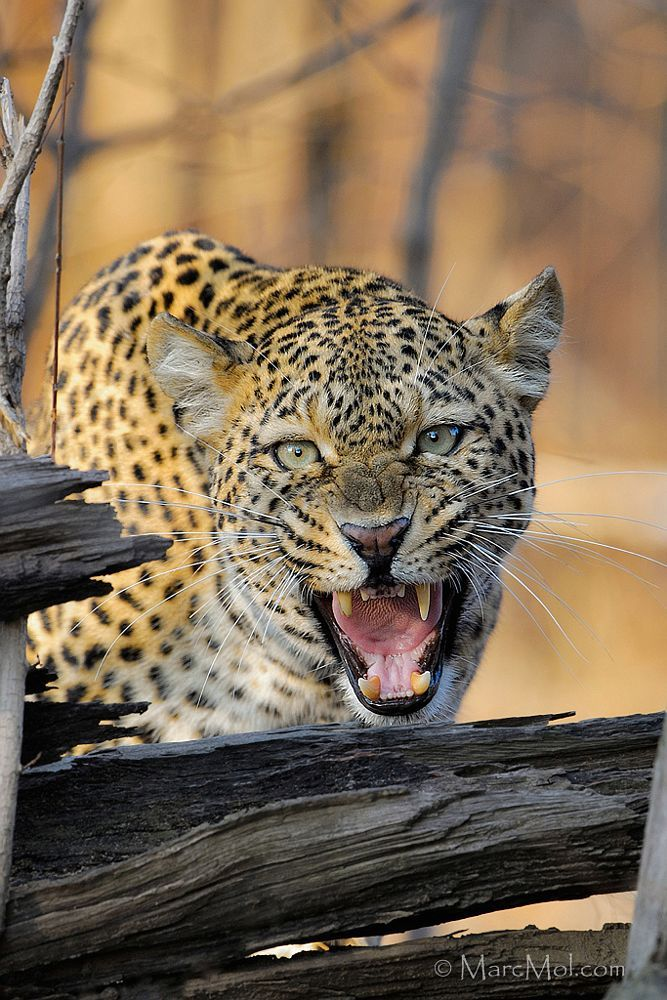 Leave now! by Marc MOL on 500px