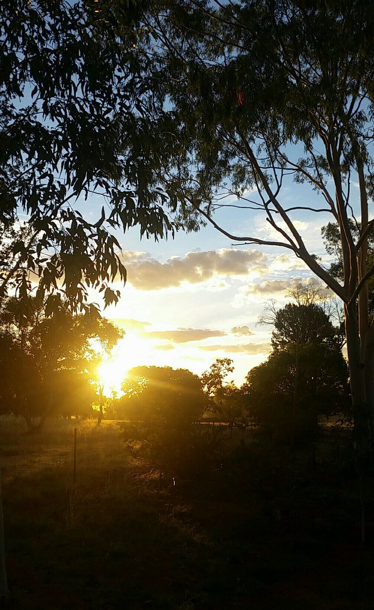 Sunrises through the gumtrees