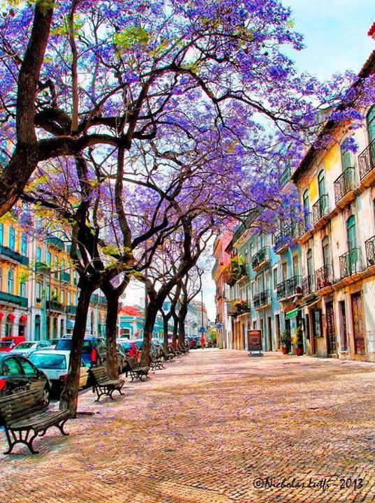 Os jacarandás de Lisboa, Portugal