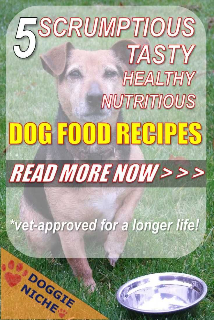 I Love These Dog Food Recipes Commercial Dog Food These Days Is