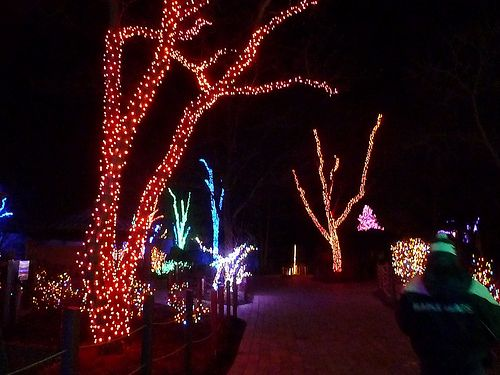 96 best Toledo Zoo images on Pinterest | Zoos, Before christmas ...