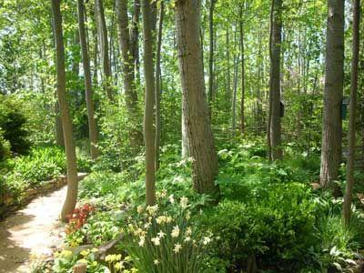 73 best Woodland Gardens images on Pinterest