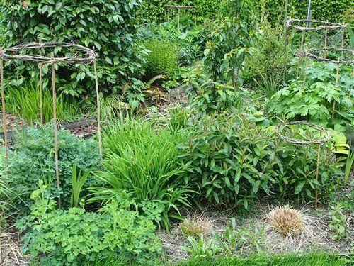 plantensteunen van wilgentenen en bamboe