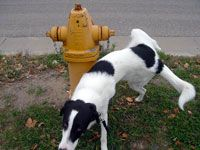 The 25 Best Cleaning Dog Pee Ideas On Pinterest Dog Pee