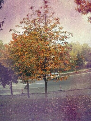 Tree ♡