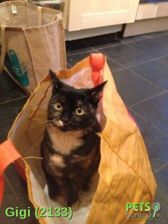 Please help us find Gigi the Cat missing in the SE26 area. For more details click http://j.mp/1BoZNpZ