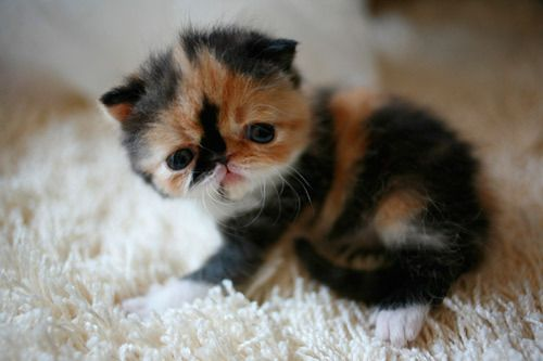 Baby pudgeface!