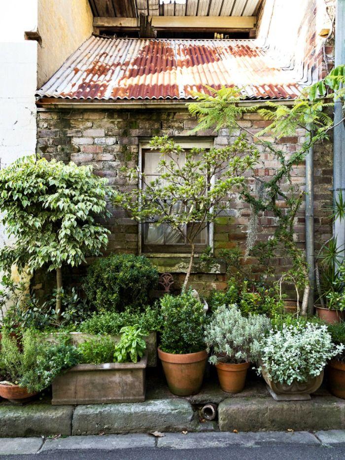 Un jardín en macetas en el centro de la ciudad - Guia de jardin. Aprende a cuidar tu jardín.