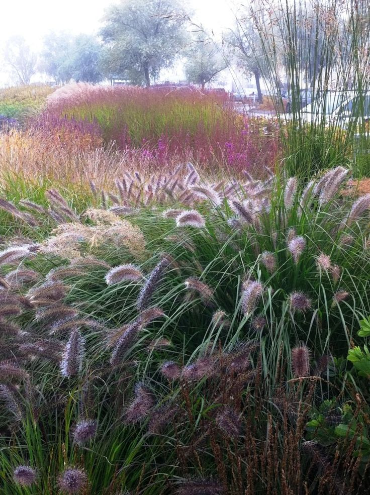 Landscape design by piet oudolf for Purple grasses for landscaping